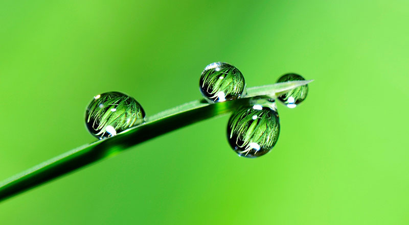 Water droplets and grass. Image by ju Irun from Pixabay